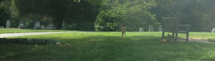 Deer fawns at Mt. Rest Cemetery in La Plata, MD.  The Cox family graves can be seen on the left side of the image.