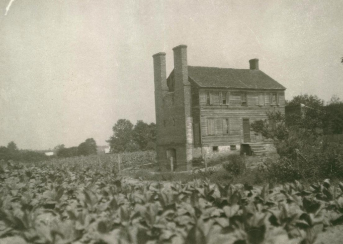 Port Tobacco's Chimney House  surrounded by tobacco plants circa 1930