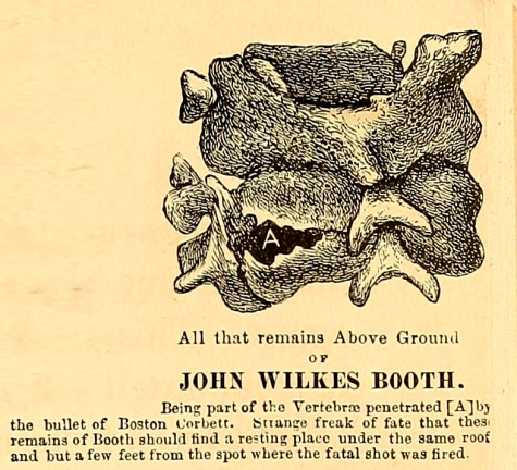 Booth's Vertebrae drawing Ten Years in Washington