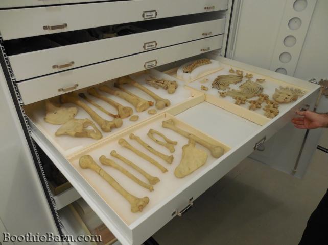 Charles Guiteau's skeleton NMHM