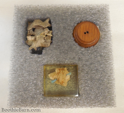 John Wilkes Booth Vertebrae and Spinal Cord