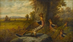 A Family of Grouse by Howard Hill